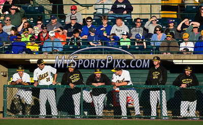 4/23/2016 Mike Orazzi | Staff New Britain Bees Saturday night.